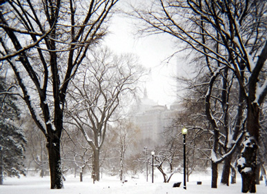 BostonPublicGarden: Boston Public Garden under snow.