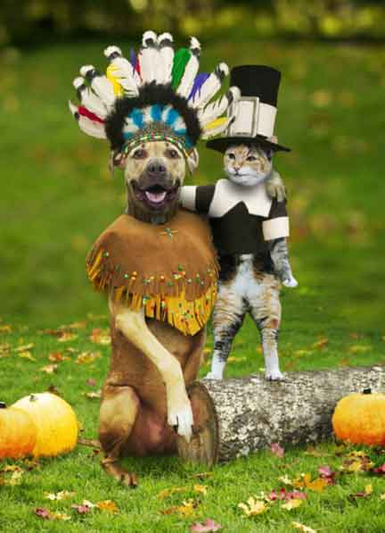 DogCatThanksgiving: Cat in Pilgrim outfit and dog with feather headdress.