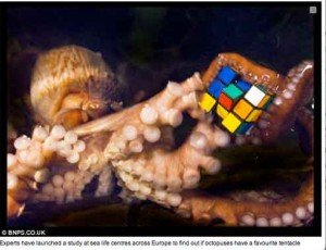 Octopus with Rubik\'s cube